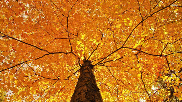 Welcome to Autumn, the Season of Poetry: 6 Poems to Help You Fall ...